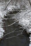 黑河在多雪的森林里 免版税库存照片