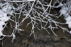 黑河在多雪的森林里 免版税图库摄影