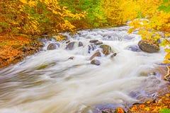 河在安大略的阿尔根金族公园,加拿大 免版税库存照片