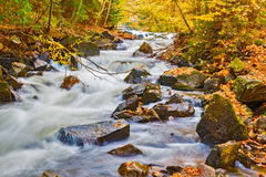 河在安大略的阿尔根金族公园,加拿大 库存图片