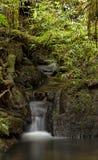 河在密林 免版税库存照片