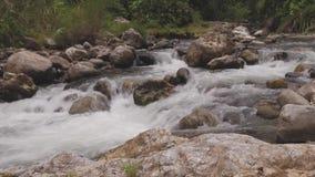 河在密林 影视素材