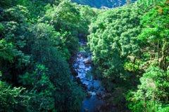 河在山密林 库存图片
