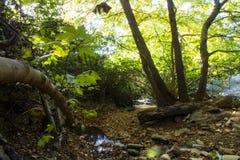 河在希腊的森林里 免版税图库摄影