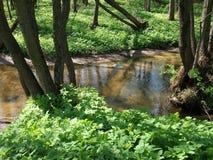 河在春天森林 库存照片
