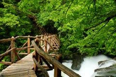 河在春天 库存照片