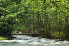 河在春天 免版税库存图片