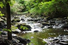 河在有桥梁的森林里 库存图片