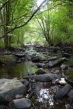 河在有桥梁的森林里 库存照片