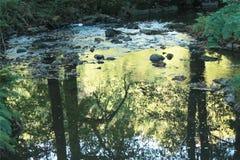河在有石头的森林里 免版税图库摄影