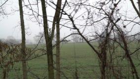 河在有雾的天,水表面平静的场面,树reflectio在池塘 股票录像
