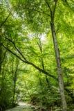 河在森林克里米亚半岛半岛晴朗的绿色树夏天 库存图片