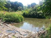 河在森林近的wirthing的西部苏克塞斯 库存照片