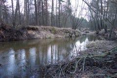 河在森林里在波兰 免版税库存照片