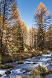 河在森林里,秋天季节Devero阿尔卑斯 免版税图库摄影