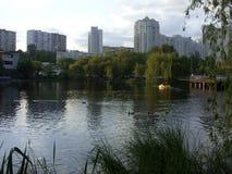 河在森林里 图库摄影