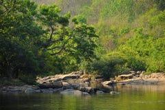 河在森林里 免版税图库摄影