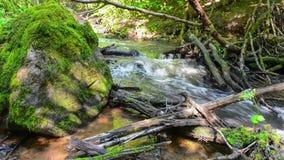 河在森林里 影视素材