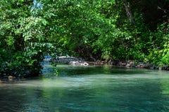 河在森林,大水里 免版税库存图片