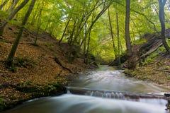 河在森林 免版税图库摄影