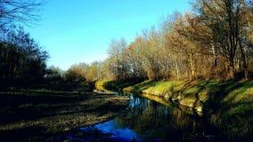 河在森林 免版税库存照片