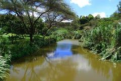 河在森林 库存照片