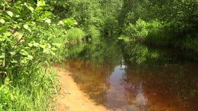 河在森林4K里 股票录像