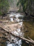 河在深森林里 免版税库存照片