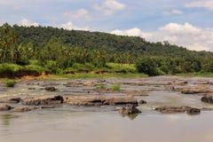 河在热带密林 库存图片