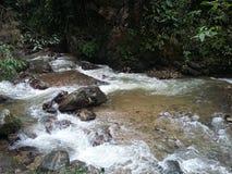 河在热带森林里在哥伦比亚 免版税库存照片