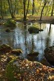 河在秋天森林里 库存照片