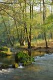 河在秋天森林里 免版税库存照片
