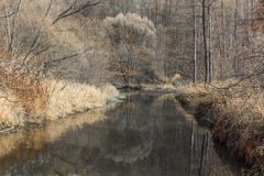 河在11月 免版税图库摄影