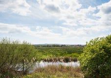 河在绿色春天夏天乡下 免版税库存图片