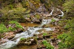 河在Apuseni,罗马尼亚 免版税库存照片
