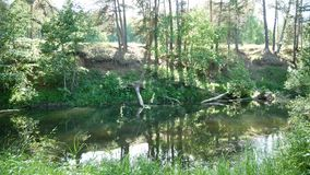 河在forestSunny天 股票录像