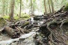 河在Rainforrest 图库摄影