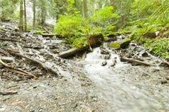 河在Rainforrest 免版税图库摄影