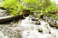 河在Rainforrest 免版税库存照片