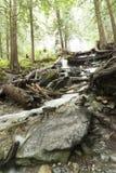 河在Rainforrest 库存照片