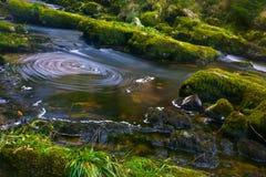 河在Tollymore森林公园 免版税库存照片