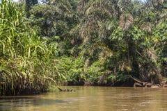 河在Tortuguero,哥斯达黎加 免版税库存图片