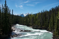 河在yoho国家公园 免版税库存照片