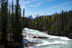 河在yoho国家公园 库存图片