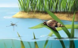 河场面:在草,湖水的蜗牛 免版税库存图片
