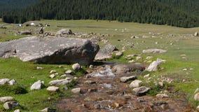 河小河和绿色山盖了蓝天背景的森林 股票视频