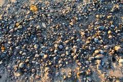 河岸在黎明 免版税库存图片