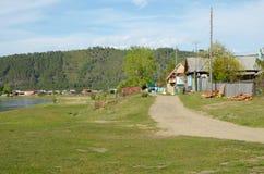 河岸的小俄国村庄 母牛横向牧场地美丽如画的夏天 免版税图库摄影