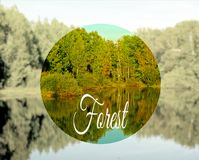 河岸的槭树森林 免版税库存照片
