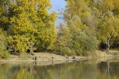 河岸的渔夫 河岸的秋天风景 白杨树黄色叶子  秋天浮子捕鱼浮动叶子水黄色 免版税库存照片